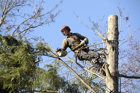 Arborists From Frisco Tree Service Respond Quickly To Storm Damaged Trees 6