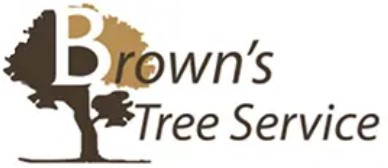 Fort Worth Tree Service Experts in Fort Worth, TX Announces the Launch of Its Newly Rebuilt Website Featuring All Tree Services 6