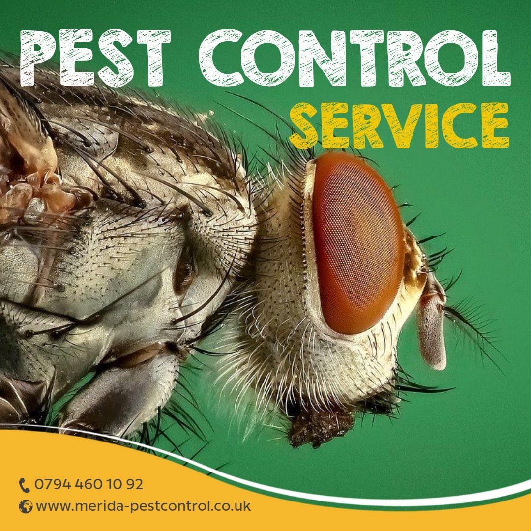 A Brilliant Approach of Organic Technique of Pest Control By Pest Control Harefield, Pest control Harlington and Pest Control Harmondsworth 6