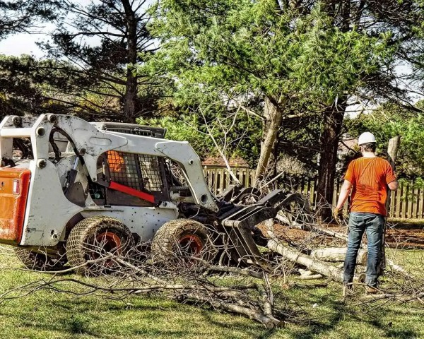 Dallas Tree Service Experts Has New Blogs Posted On Their Website Featuring Tree Service Dallas, Tree Trimming, Tree Removal, And Tree Pruning 10