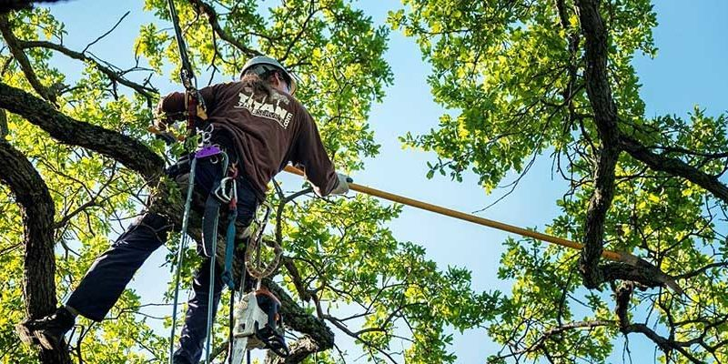 Tree Service Pros Provides Insights into The Best Time to Trim Trees 6