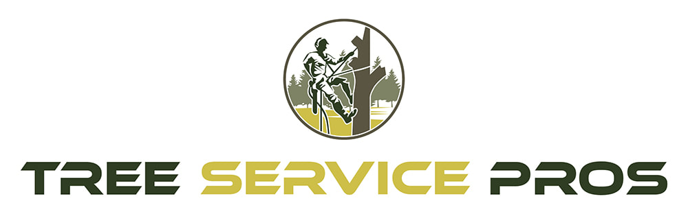 Tree Service Pros of Plano Highlights the Signs for Calling Professional Tree Removal Services 6